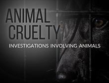 Animal Cruelty title image